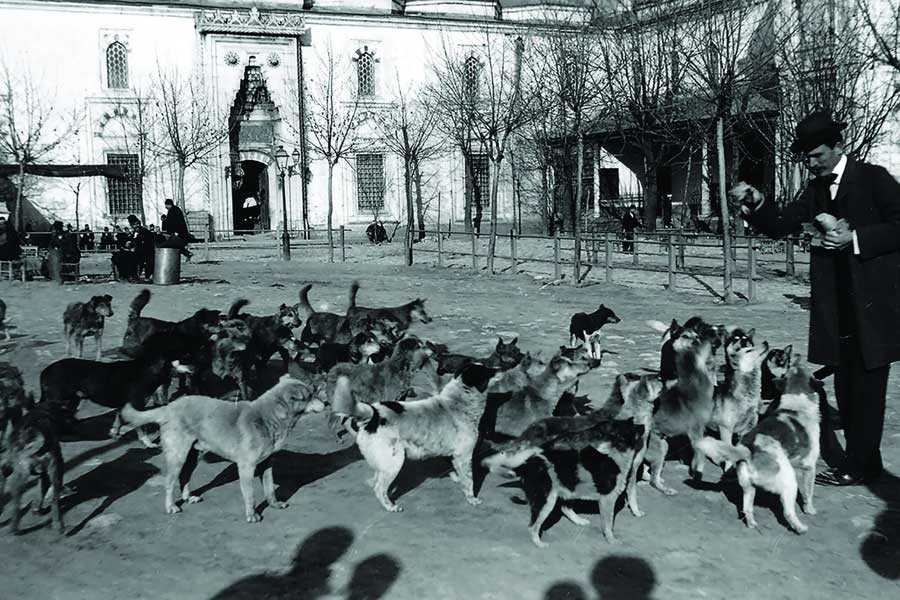 20. yüzyılın başı, Avrupalı bir gezgin ile İstanbul'daki sokak köpekleri
