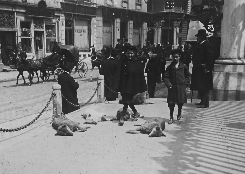 Beyoğlu'nda sokak köpekleri. Anonim, 20. yüzyıl başı