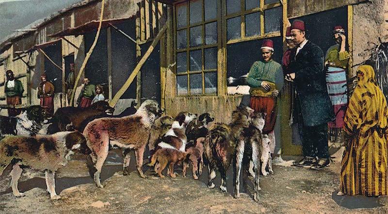 Bir grup sokak köpeği. 20. yüzyıl başı,