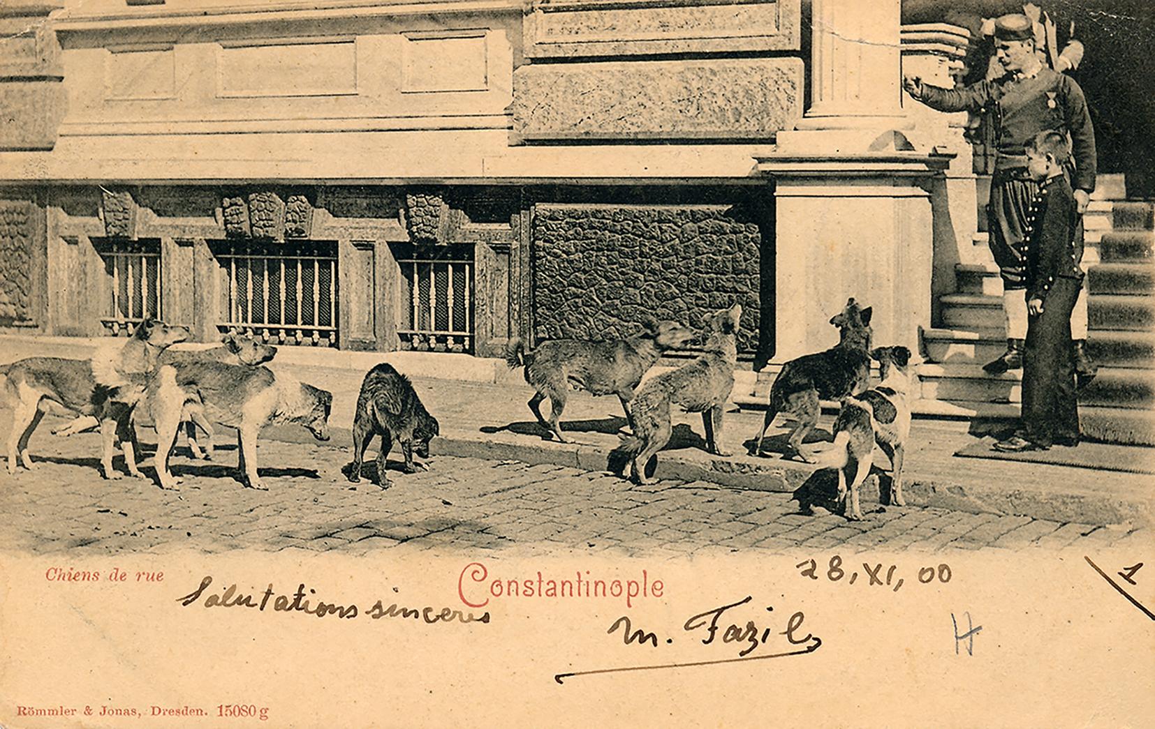 Bristol Oteli'nin (Pera Müzesi) önünde sokak köpekleri.