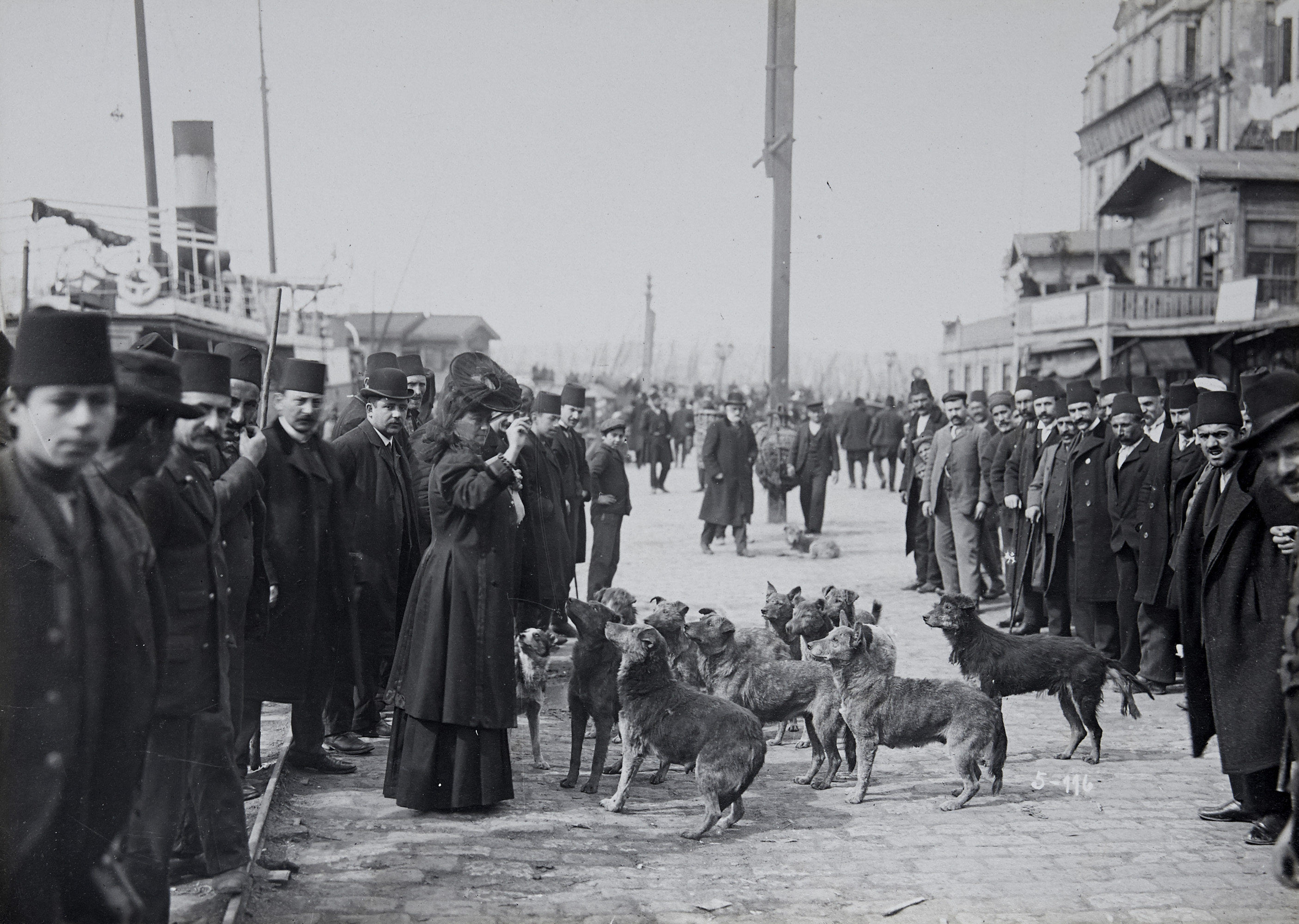 A European traveler with street dogs