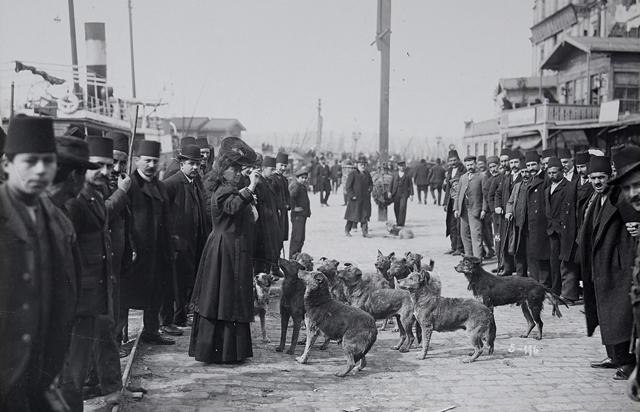 Cincinnati gemisiyle Akdeniz turuna çıkan Avrupalı bir gezgin Karaköy'de sokak köpekleriyle
