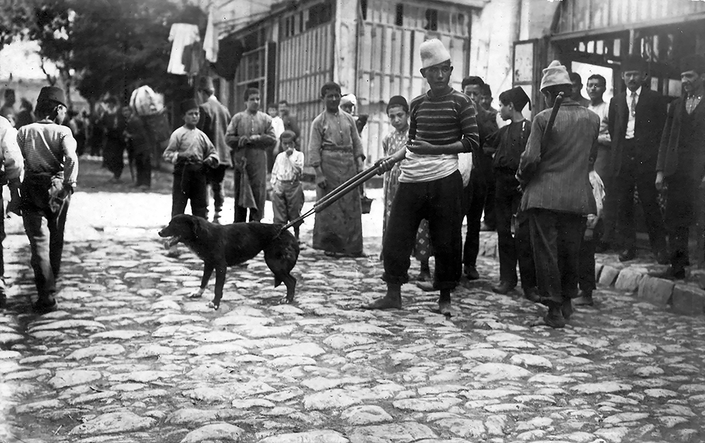 Sokak köpeklerinin yakalanışı