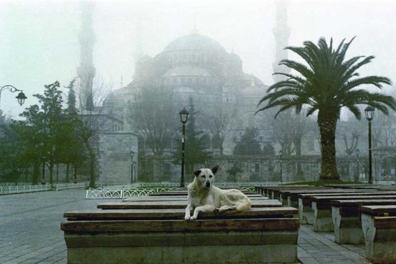Sultan Ahmet Camii önünde bir sokak köpeği