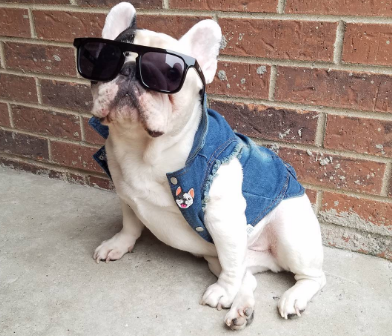 manny_the_frenchie